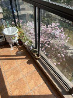 (城南)金水湾国际社区(北区)2室2厅1卫4200元/月107m²出租